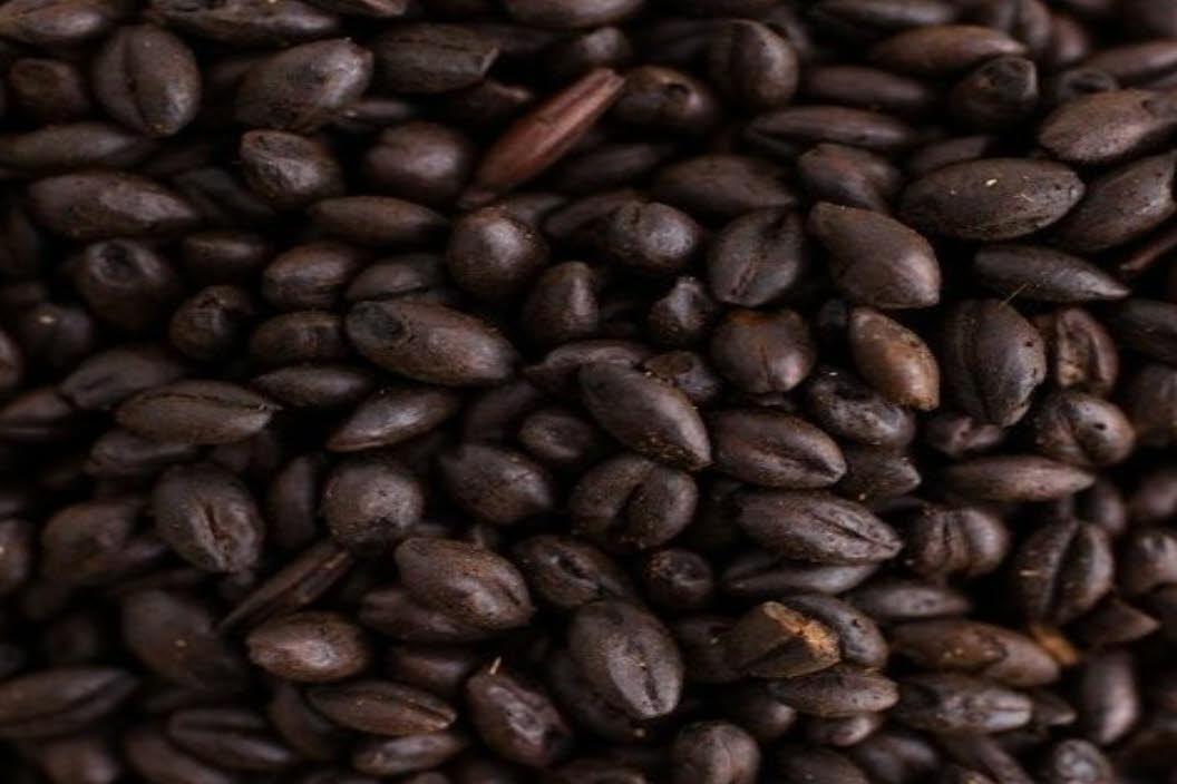 chateau chocolat malt